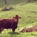 5/14, 15 勉強ログ。ある日、山の中。牛さんに出会った